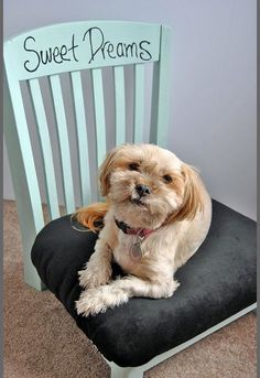 upcycled diy pet bed from an old chair, how to, pets animals, repurposing upcycling Pet Food Storage, Storage Ideas, Dog Shower, Animal Projects, Diy Projects, Pet Home, Pet Beds, Doggie Beds, Diy Stuffed Animals