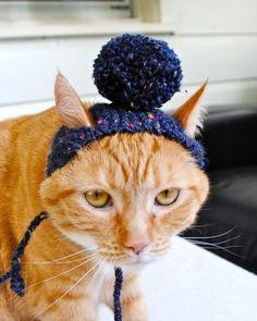 gatos con gorros a crochet