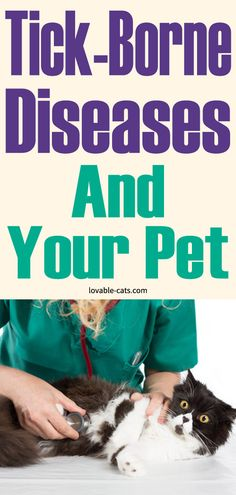 Tick-Borne Diseases And Your Pet Cat Care Tips, Pet Care, Cat Toilet Training, Dog Pin, Cat Treats, Love Pet, Zoo Animals, Ticks, Pet Health