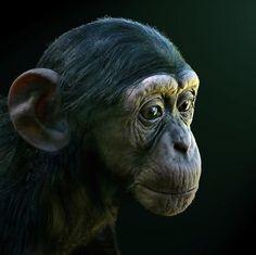 Portrait of a Baby Chimpanzee by JulieMavros.deviantart.com on @deviantART