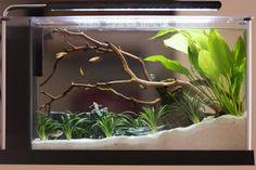 Small aquarium for fish fry or brine shrimp? Aquarium Setup, Aquarium Design, Aquarium Fish Tank, Planted Aquarium, Aquarium Rocks, Small Fish Tanks, Cool Fish Tanks, Fish Tank Themes, Fish Tank Design