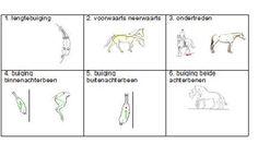 Klassiek Paardrijden - Rechtrichten, hoe