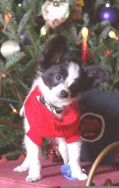 Zali's first Christmas