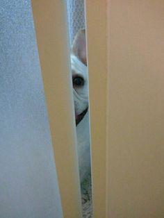"""Peeping Apache"""