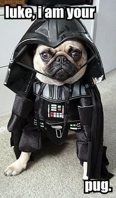 Luke, I am your..................................................................................    pug.