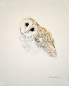 Awwww.....Owl Drawing Barn Owl Pencil Drawing Plaintive by KEBookmanFineArt, $55.00