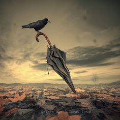 SO COOL!!! Maybe Raven is waiting for some Rain in this bone dry landscape..... by Caras-Ionut