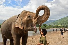 Mahout and Elephant after bathing in the river at Elephant Nature Park in northern Thailand