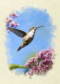 """Hummingbird Beauty Blank Note Card Greeting Card for sale by Christina Rollo.  Our premium-stock greeting cards are 5"""" x 7"""" in size and can be personalized with a custom message on the inside of the card.  All cards are available for worldwide shipping and include a money-back guarantee."""