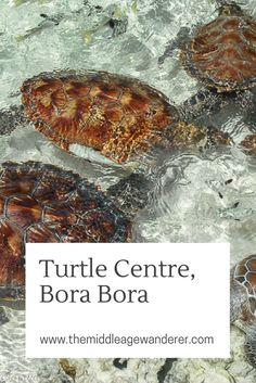 The Turtle Centre at the Le Meridian on Bora Bora, Tahiti is doing wonderful work rehabilitating and breeding Green and Hawksbill Turtles.