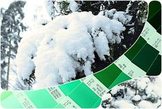 Floral Passions: #Snow on the Conifers