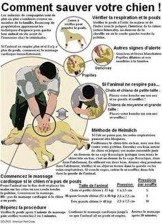 Cela peut sauver votre chien...