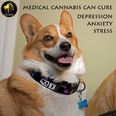 #CannabisIsTheCure Visit www.420101com to learn how Cannabis can cure depression, anxiety, stress, and last but not least, Cancer #killcancer