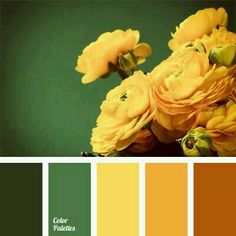 Green / Yellow