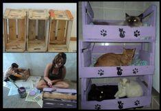 Caisses en bois transformées en paniers pour chats