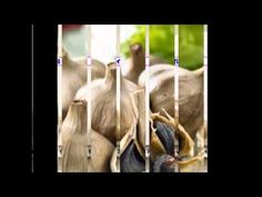 """裕美・ルミィヤンツェヴァのマイ スライドショー:【送料無料】 岐阜からギフト:""""無農薬・自然農法"""" 岐阜産生にんにく 『元気の素』"""