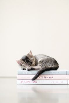 "kitten curled up asleep on a stack of books, ""cat's pajamas"", ""101 cataclysms"" & ""smitten"""