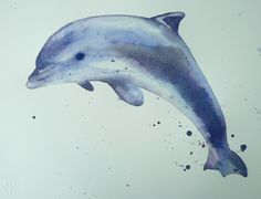 watercolor dolphins | Dolphin Watercolor Demo - 12 step painting!