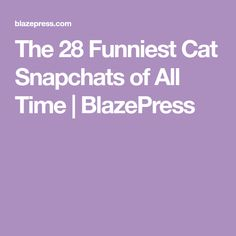 The 28 Funniest Cat Snapchats of All Time   BlazePress