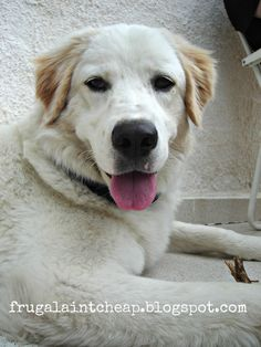 Frugal Aint Cheap: Pet safe flea control
