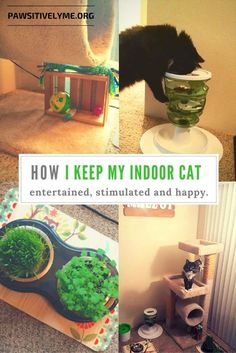 How I keep my indoor cat entertained, stimulated and happy! #indoorcattoys