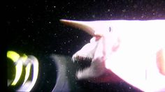 Rare video of a Goblin Shark - this is incredible!