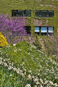 Spring in full bloom on the Staller Plaza. Photo by John Griffin/Office of Communications