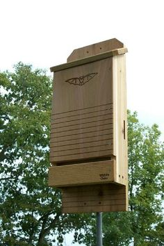 Hate mosquitoes? Build a bat house!