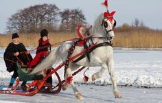 Beautiful Photo, Lovely Driving Horse !