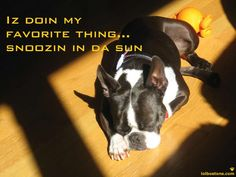 This is exactly what DMan does alllll day... He knows exactly where the sun shines through at any given moment of the day!