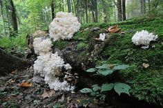 Jesień to czas grzybów / Atumn it is a mushrooms time