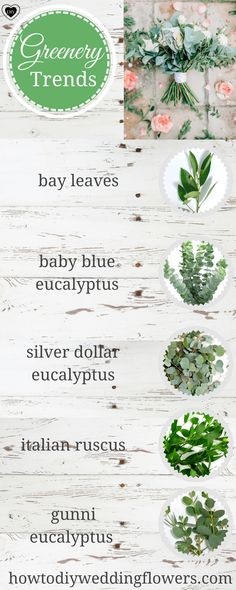 Greenery bouquet wedding trends green bouquet flowers bouquets weddings ideas how to make bouquet eucalyptus succulents foliage