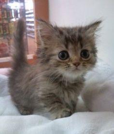 I'm your No 1 cutie patootie !!