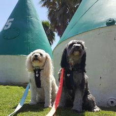 Look how big these buoys are  #cavoodle #cavoodlelovers #cavoodlesofinstagram #cavapoo #cavapoosofinstagram #cavapoogram #oodle #oodlelovers #oodlesofinstagram #ilovemydog #ilmd #doglovers #dogloversofinstagram #dogsofinstagram #dogstagram #Madison #Lexie #walkies #beautiful #love #bestfriends #easternbeach #Geelong  #instalife #instapic #nature #buoy #photooftheday by banshee19 http://ift.tt/1JtS0vo