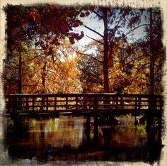 Pond, New Iberia City Park, New Iberia, La