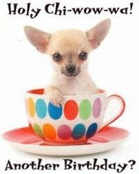 Image Result For Birthday Chihuahua Happy Birthday Chihuahua