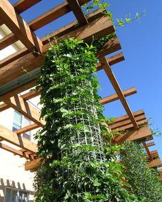 garden walkway constructed from timber and vines Curved Pergola, Pergola Swing, Metal Pergola, Pergola With Roof, Pergola Shade, Patio Roof, Pergola Patio, Pergola Plans, Pergola Ideas