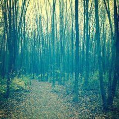 dreamy photography . woodland art . green black . by joystclaire, $30.00