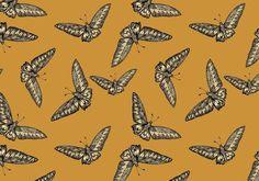 Devine Moth Wallpaper by Timorous Beasties
