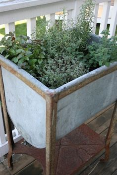 love this old tub garden! my hubby creates herb gardens in old Weber barbeques ;0)