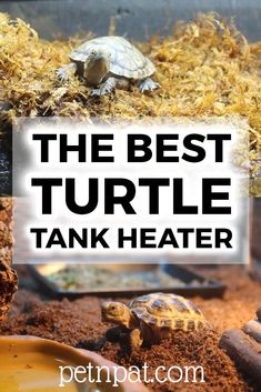 What is the best turtle tank heater? The most important thing you need to remember when buying a water heater for turtles is. Animals For Kids, Animals And Pets, Baby Animals, Pet Turtle Care, Turtle Habitat, Turtle Pond, Pet Organization, Working Dogs, Pet Grooming