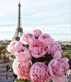 Pin de linda thorson en flowers pinterest flor y flores el rincn de mi abuela anita photo altavistaventures Image collections