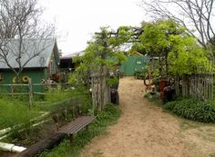 If you live here in Austin and listen to KLBJ AM 590 on Saturday mornings, more than likely you have heard of John Dromgoole, aka Natural Gardener. He is an amazing gardener filled with wisdom and