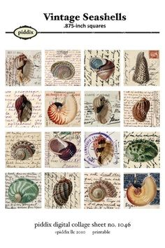 4x6 inch digital collage sheet sampler  Vintage Seashell by piddix, $2.00