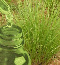 Healing, Herbs, Plants, Herb, Plant, Planets, Medicinal Plants