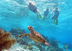 Things To Do In Curacao - Water Sports