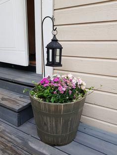 Succulents, Outdoor Structures, Plants, Succulent Plants, Plant, Planets