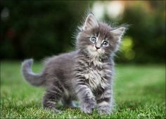 unusual cat breeds | Cute Cats Pictures