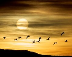 Scott Bourne's Top Seven Bird & Wildlife Photography Hotspots