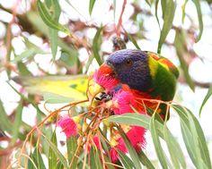 The Atlas of Living Australia: Collect it, log it, use it - CSIRO blog